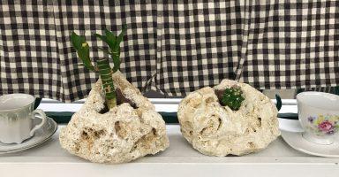 琉球石灰岩アレンジメント作品 幸福の竹とサボテン