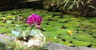 首里の龍潭の池にあるといいね!琉球石化岩と花!