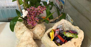 琉球石灰岩とミニ胡蝶蘭(響)