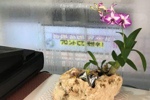 琉球石灰岩とミニ胡蝶蘭 1個税込み3800円 写真はSサイズ キャンディや飴入れ!