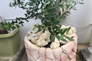 琉球石灰岩アレンジメント 坪庭施工3ヶ月後